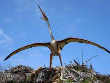 Discovered: Pterosaur with a Head That Looks Like a Butterfly