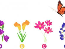Pick a Flower! Find out What you`re Like in Love