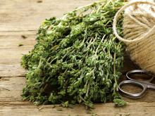 Fragrant Thyme Protects the Brain from Dementia