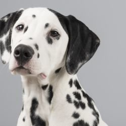 Meaning of the Different Dog Breeds in Dreams