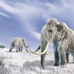 How Did Mammoths Go Extinct?