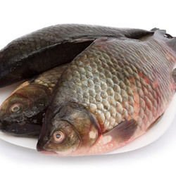 Beer Carp for St. Nicholas' Day