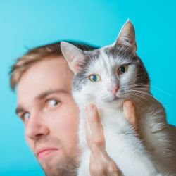 Mystics: If you Hate Cats, your Karma is Tarnished