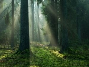 German Researcher Reveals the Secret Life of Trees