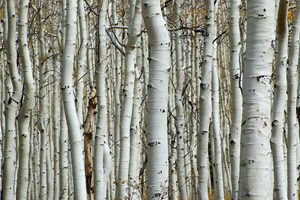 Birch talismans against negative energy and depression