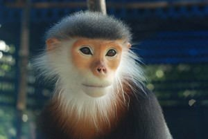 Feng Shui Horoscope 2014 for the Monkey