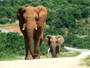 Unbelievable Facts about Elephants you May Not Know