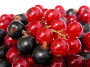 french currant