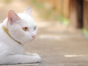 Omen: What will Happen to you if a Cat Appears Outside your Home
