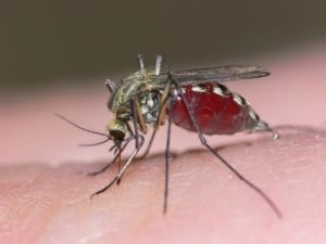 The Future is Here! Mosquitos to Capture Criminals