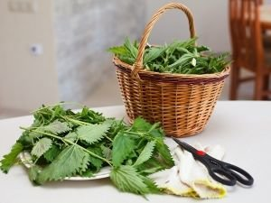 Lose weight with nettle