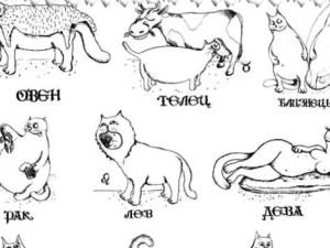 What Cat Breed Are you Based on Zodiac Sign?