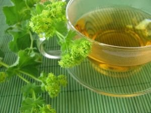 Common Lady's Mantle for Diarrhea and Gastrointestinal Problems