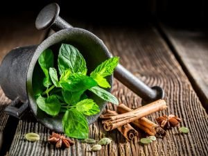 The Magical Properties of Mint! Why Everyone Should Grow it