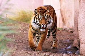 Cataclysms and catastrophes in the year of the Tiger