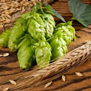 hops pinecones