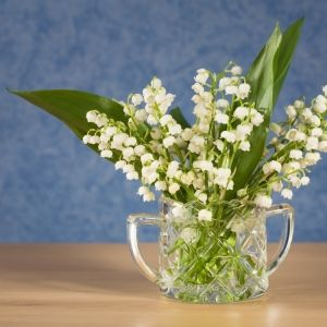 growing Lily of the Valley