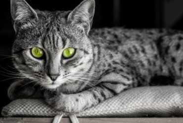 10 Cats and Dogs of Magical Origin