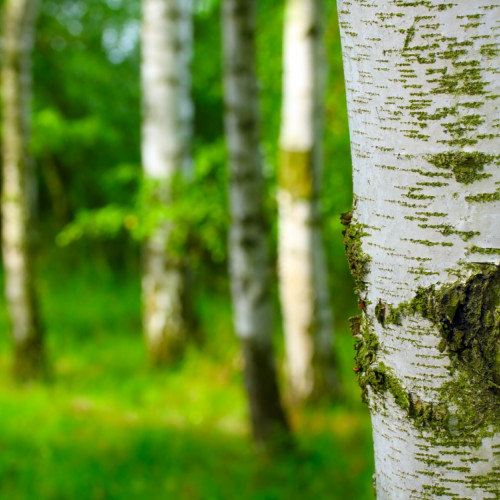 Trees with Magical Properties