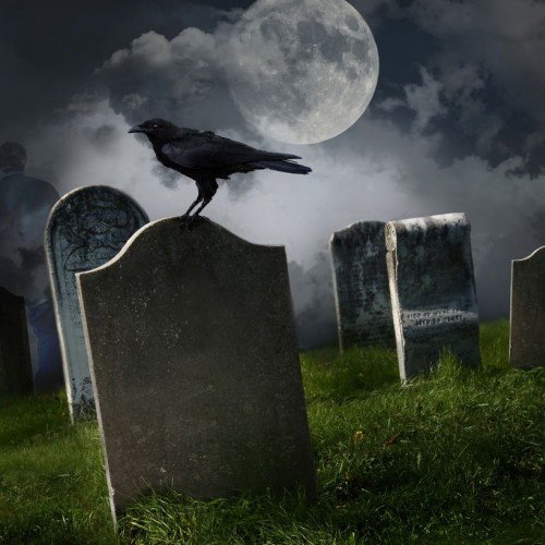 Crows Can Actually Recognize Death