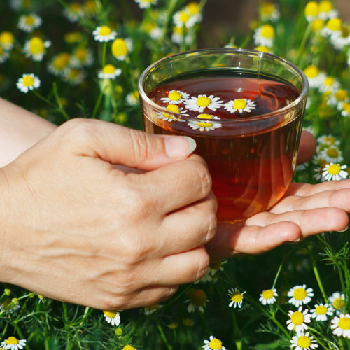 Why is it Important to Drink Chamomile Tea Regularly?