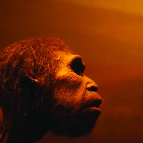 The Truth About Neanderthals and Their Large Noses