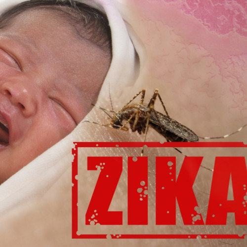 The Zika Virus is an Evil Conspiracy! Analyze the Theories