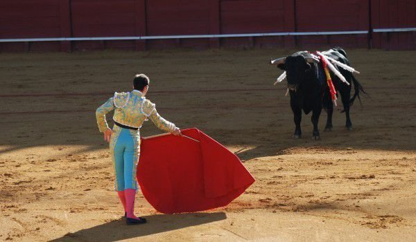 Why Do Bulls Charge When They See the Color Red?
