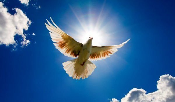 What Does it Mean if you See a White Dove?